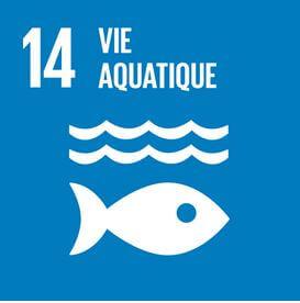 Initiatives de conservation de la nature telles que le régénération des rivières